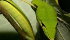 Snake Wallpaper Image Background Free Download