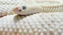 WideScreen High Resolution Snake HD Wallpapers