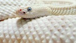 WideScreen High Resolution Snake HD Wallpapers