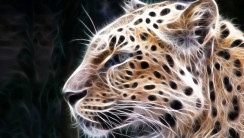 Leopard Animal Wallpaper