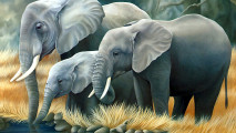 Free Download Animal Wallpapers 3D Elephant