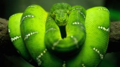Snake Animal Wallpaper Photo Picture Gallery Free