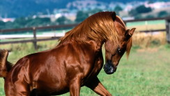 Big Horses Animal Photos And HD Wallpapers Gallery