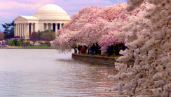 Creating Really Awesome Free Trips Washington DC