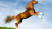 Brown Horse With White Legs Photo Picture Image