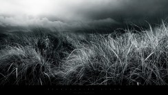 Abstract Black And White Nature Fields HD Wallpapers Gallery Free