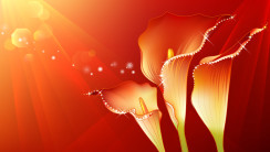 Abstract Red Flowers Design HD Wallpapers Pictures Images Free