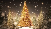 Awesome Christmas Tree And Star Picture Image HD Wallpaper