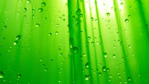 Simply Green Water HD Wallpaper Picture For Your PC Desktop