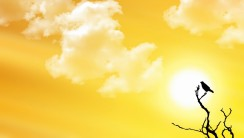 Summer Yellow Sky Nature HD Wallpaper Picture Free Download