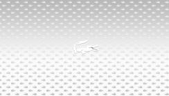 White Lacoste Logo Underwear HD Wallpaper Widescreen For PC Desktop