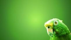 Parrot wallpaper HD