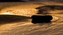 Black Stone on Golden Water HD Wallpaper