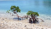 Mangrove inTranslucent Water HD Wallpaper