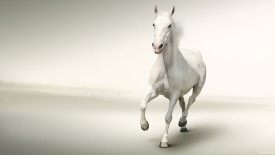 White Horse Running White Background HD Wallpaper