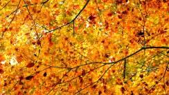 Autumn Leaves HD Wallpaper