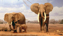 Magnificent Elephant Family Wallpaper