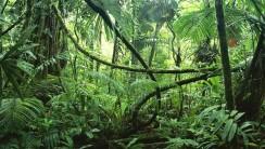 Amazon Rainforest HD Wallpaper