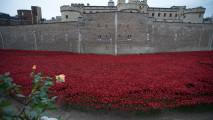 Britain's Poppy Field Trubute to World War I Soldiers HD Wallpaper
