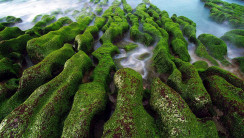Green Rocks by the Ocean HD Wallpaper