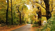 Golden Autumn HD Wallpaper