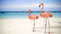 Flamingos on the Beach HD Wallpaper