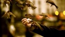 Sparrow Friends HD Wallpaper