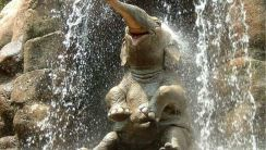 Elephant Showering HD Wallpaper