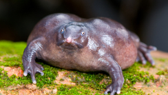 Purple Frog HD Wallpaper