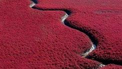 Red Beach Panjin China HD Wallpaper