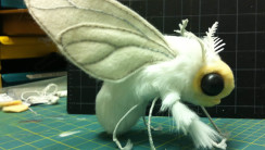 Venezuelan Poodle Moth HD Wallpaper